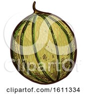 Clipart Of A Sketched Cantaloupe Tropical Fruit Royalty Free Vector Illustration