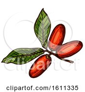 Clipart Of A Sketched Miracle Fruit Tropical Exotic Fruit Royalty Free Vector Illustration