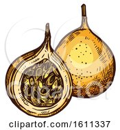 Clipart Of A Sketched Grenadilla Tropical Exotic Fruit Royalty Free Vector Illustration