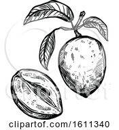 Clipart Of A Sketched Sapodilla Tropical Exotic Fruit Royalty Free Vector Illustration