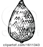 Clipart Of A Sketched Salak Tropical Exotic Fruit Royalty Free Vector Illustration