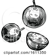 Clipart Of A Sketched Jabuticaba Tropical Exotic Fruit Royalty Free Vector Illustration