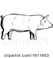 Clipart Of A Black And White Pig Royalty Free Vector Illustration by Vector Tradition SM