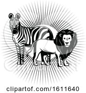 Clipart Of A Black And White Zebra And Male Lion Over Sun Rays Royalty Free Vector Illustration
