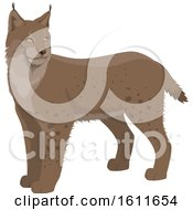 Clipart Of A Lynx Royalty Free Vector Illustration
