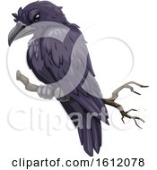 Clipart Of A Black Raven Or Crow Royalty Free Vector Illustration