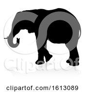 Elephant Safari Animal Silhouette On A White Background