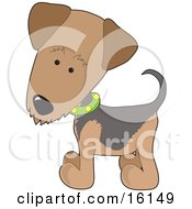 Airedale Or Waterside Terrier Puppy Dog Wearing A Green Collar With Yellow Dots by Maria Bell