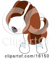 Curious Little Beagle Puppy Dog Tilting His Head by Maria Bell