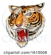 Clipart Of A Roaring Angry Tiger Mascot Face Hand Drawn Royalty Free Vector Illustration