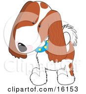Cute Cavalier King Charles Spaniel Puppy Dog Wearing A Blue Collar With Yellow Spots Tilting His Head In Curiousity by Maria Bell