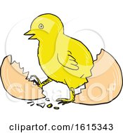 Clipart Of A Sketched Chick Hatching Out Of An Egg Royalty Free Vector Illustration