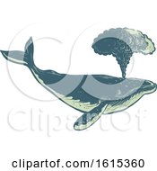 Scratchboard Style Spouting Humpback Whale