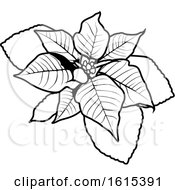 Black And White Christmas Poinsettia