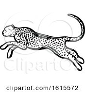 Clipart Of A Black And White Cheetah Royalty Free Vector Illustration by Vector Tradition SM