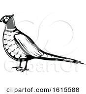 Black And White Pheasant Bird