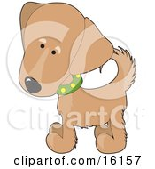 Cute Golden Retriever Puppy Dog Wearing A Green Collar With Yellow Spots Slightly Tilting His Head In Curiousity by Maria Bell