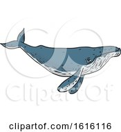 Sketched Humpback Whale