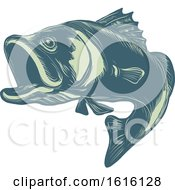 Clipart Of A Scratchboard Style Barramundi Or Asian Sea Bass Royalty Free Vector Illustration