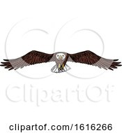 Clipart Of A Sketched Flying Bald Eagle Royalty Free Vector Illustration