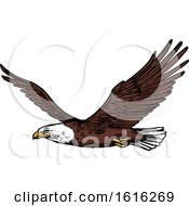 Clipart Of A Sketched Flying Bald Eagle Royalty Free Vector Illustration by Vector Tradition SM