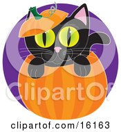Cute Black Cat With Big Green Eyes Peeping Out From Inside A Halloween Pumpkin With The Top On His Head