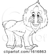 Black And White Mandrill