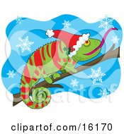 Green And Red Chameleon Lizard Wearing A Santa Hat Adorned With Holly Sticking His Tongue Out To Catch A Snowflake While Perched On A Branch On Christmas