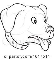 Black And White Surprised Labrador Retriever