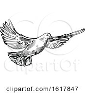 Black And White Sketched Flying Dove