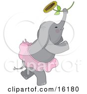 Cute Elephant With Rosey Cheeks Wearing A Ballerina Tutu While Dancing Ballet With A Sunflower Clipart Illustration Image by Maria Bell #COLLC16180-0034