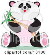 Cute Chubby Panda Sitting And Holding Bamboo Stalks