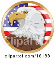 American Bald Eagle Haliaeetus Leucocephalus In Front Of The Stars And Stripes Of An American Flag Clipart Illustration Image