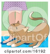 Affectionate Brown Cat Rubbing Against A Womans Legs For Attention Clipart Illustration Image