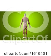 3d Muscle Man On A Green Background