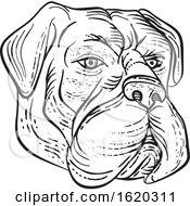 Bullmastiff Head Black And White Etching