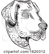 Anatolian Shepherd Dog Head Etching Black And White
