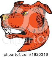 Angry American Staffordshire Bull Terrier Etching Color