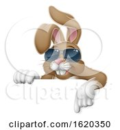 Easter Bunny Cool Rabbit Pointing Cartoon