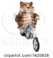 January 16th, 2019: 3d Tabby Kitty Cat On A White Background by Julos