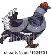 Sketched Bird