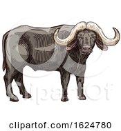 Sketched Buffalo