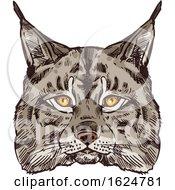 Sketched Bobcat