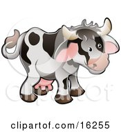Adorable White Dairy Farm Cow With Black Spots And Pink Udders Clipart Illustration