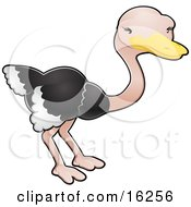 Adorable Ostrich Bird With Black And White Feathers Clipart Illustration