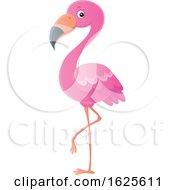 Pink Flamingo Bird