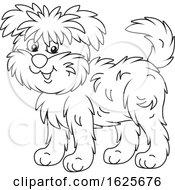 Black And White Affenpincher Monkey Terrier Dog