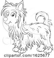 Black And White Australian Silky Terrier Dog