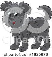 Black Affenpincher Monkey Terrier Dog