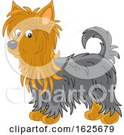 Tan And Black Australian Silky Terrier Dog